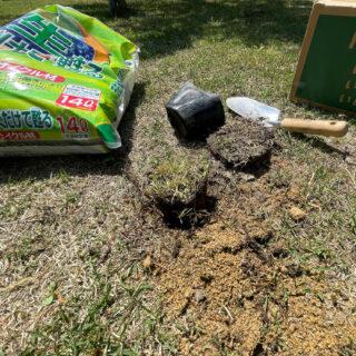 芝生のメンテナンス